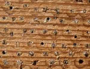 Ganz und zu Extrem Bienenhotel.de - Wildbienen, Nisthilfen, Bestäubung &RP_73